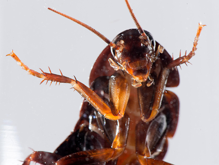 Cockroach Control & Removal Service in Etobicoke